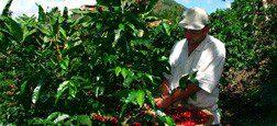 El Comercio Justo, una alternativa real de desarrollo para las comunidades del Sur