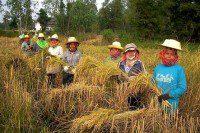 Green Net Thailandia (4)reddef