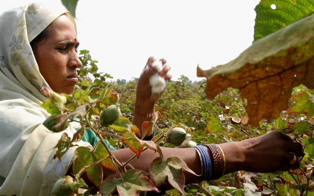 El Comercio Justo, el Medio Ambiente y los Objetivos de Desarrollo Sostenible