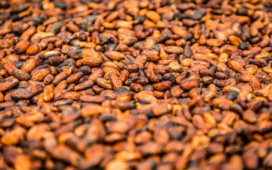 Oikocredit invierte 7 millones de euros para apoyar a productores y productoras de cacao a pequeña escala en Costa de Marfil