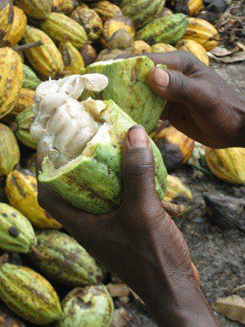 Multinacionales del chocolate contra las pequeñas organizaciones productoras de cacao: el indecente pulso